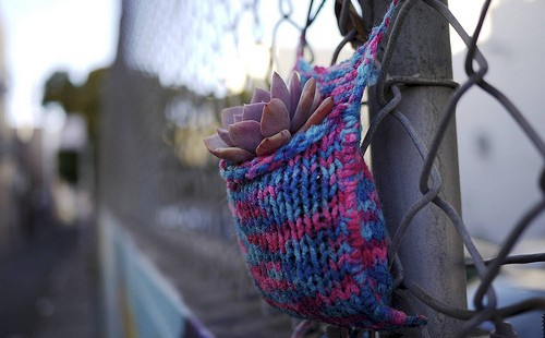 Knit Bombing + Plant Bombing